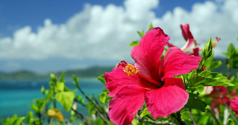 【沖縄支部】地域活性化セミナー開催します